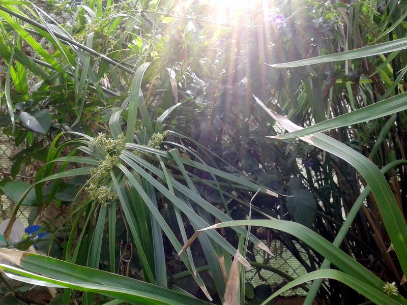 verde esmeralda en este primer mes de 2013