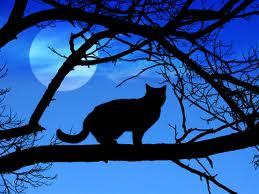 gato y luna llena