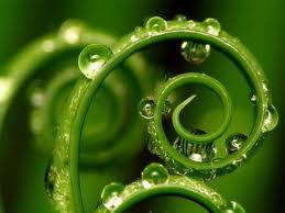 belleza vegetal