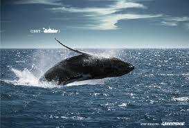 ballena nadando